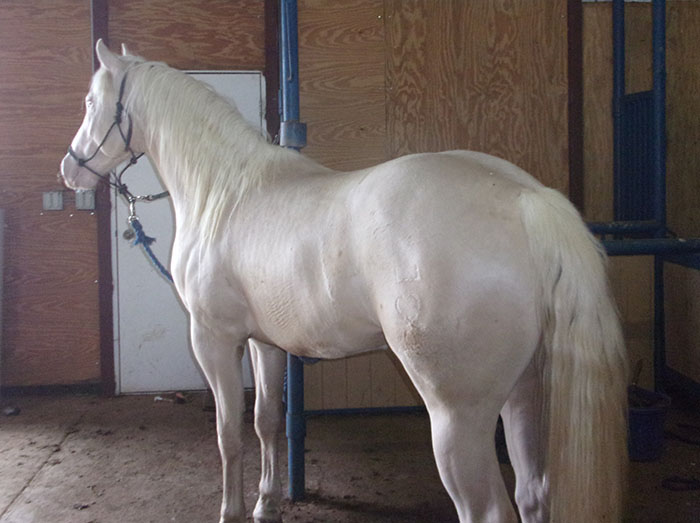 Bedonna's Performance Horses